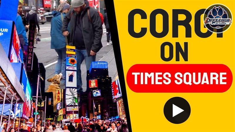 Corgi Times Square